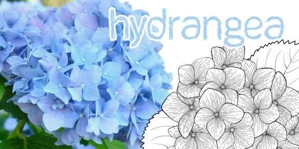 Hydrangea (Il était un vernis)