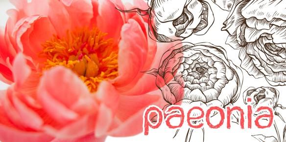 Paeonia (Il était un vernis)